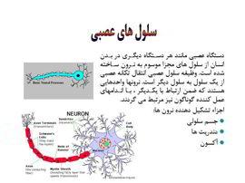 دانلود پاورپوینت دستگاه عصبی