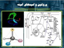 دانلود پاورپوینت پروتئین و اسیدهای آمینه در ۳۱ اسلاید قابل ویرایش
